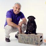 ซีซาร์ มิลลาน สุดยอดผู้เชี่ยวชาญการปรับพฤติกรรมสุนัขระดับโลก เยือนไทย ปลื้มประเทศไทยและ มั่นใจรายการใหม่ถูกใจคนไทยแน่นอน
