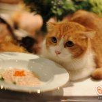 """""""ณิชา – สกาย"""" ทาสแมวตัวจริง ร่วมเอ็กซ์คลูซีฟดินเนอร์หรู กับชีบา®  อาหารแมวเกรดพรีเมียม"""